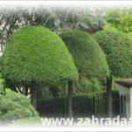 Stylově tvarované stromy