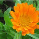 Léčivé bylinky na bolest hlavy