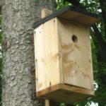 Ptačí budky pro hnízdění