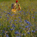 Anglický a přírodní trávník
