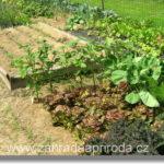 Typy půdy a jejich kultivace
