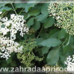 O Kouzelných bylinkách, nachlazení a očistě