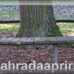 Kruhová lavička kolem stromu