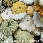 Patisony – pěstování a kuchyňské recepty