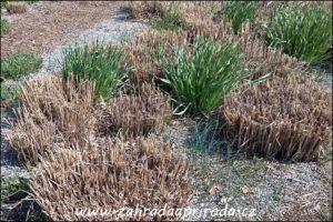 sestřižené trsy travin