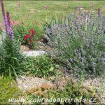 Rostliny pro štěrkovou zahradu