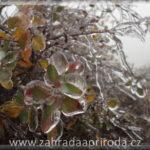 Zimní řez stromů a keřů