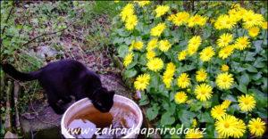kamzičník a kočka, foto TAM
