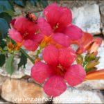 Pnoucí rostliny – základní dělení