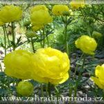 Bahenní a pobřežní rostliny